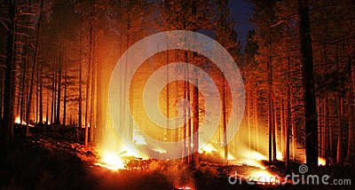 Glowing forest fire