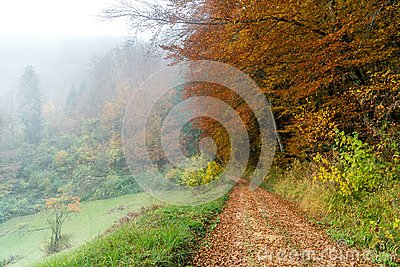 Forest path autumn with fog