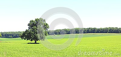 Beautiful panorama with summer landscape with lonely tree