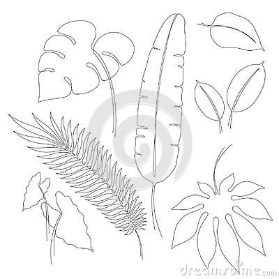 Continuous line drawings of various tropical leaves