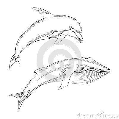 Set of isolated marine animals. Silhouette of whale and Dolphin on white background. Hand drawing in sketch style.