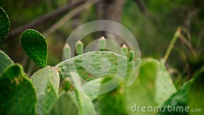 Big cactus leaves on the blurred background