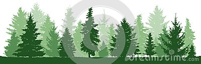 Trees pine, fir, spruce, christmas tree. Coniferous forest, vector silhouette