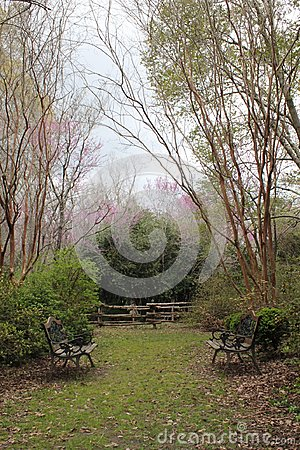 Pink flowers blooming on green trees in backyard courtyard of southern plantation