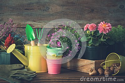 Seedlings of garden plants and flowers in flowerpots. Watering can, buckets, shovel, rake, gloves.