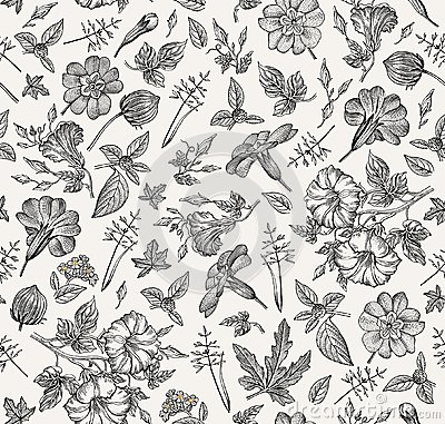 Seamless pattern. Realistic isolated flowers. Vintage background Petunia primavera hibisc Drawing engraving Vector