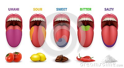 Human tongue basic taste areas. Smack map in mouth sweet, salty, sour, bitter and umami vector diagram isolated on white