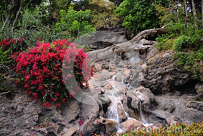 Parks and gardens on the Canary Islands