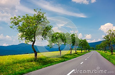 Row of trees along the road in to the mountains