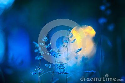 Meadow grasses in summer night