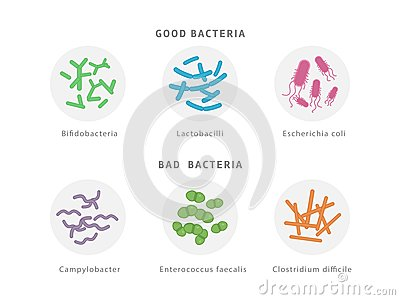 Good and bad bacterial flora icon set isolated on white background. Gut dysbiosis concept medical illustration with