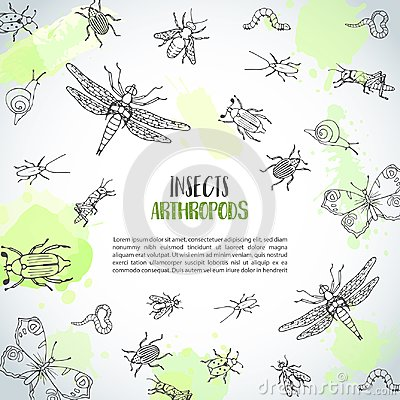 Bugs insects hand drawn background. Pest control concept. Entomology poster. Cartoon illustration of pests and bug