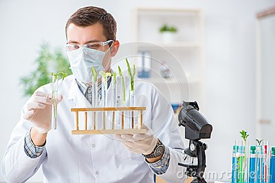 The male biochemist working in the lab on plants