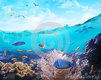 Marine life in tropical waters.