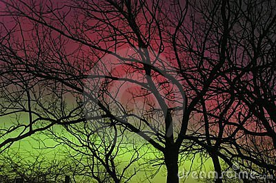 Northen Lights behind tree silhouette