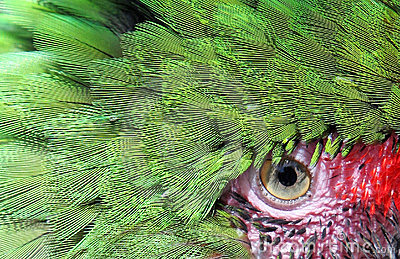Beautiful green parrot face and eye up close and personal