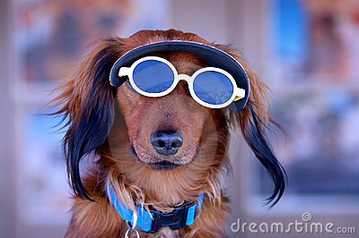 Sunglasses Puppy Dog