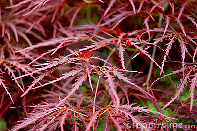 Red Fern Leaves