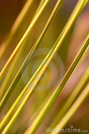 Abstract Tor Grass
