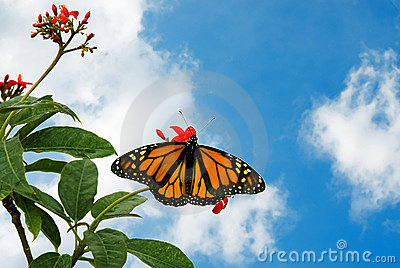 Butterfly 9a