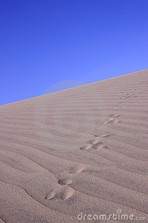 Sand Dune With Tracks