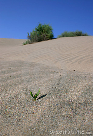 Tiny plant in the desert