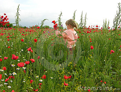Little Girl Into The Poppy Field
