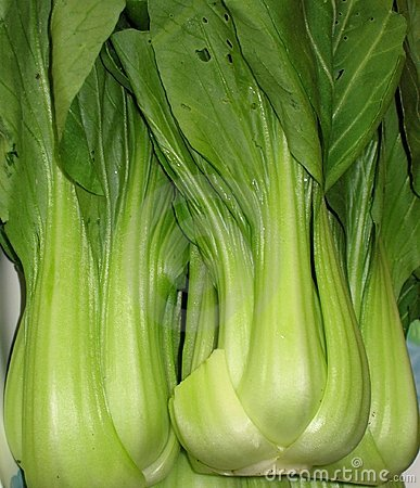 Chinese Bok Choy Vegetable