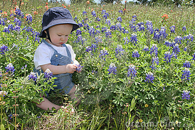 Baby in Bluebonnets