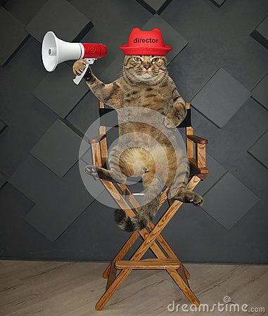 Cat director on chair