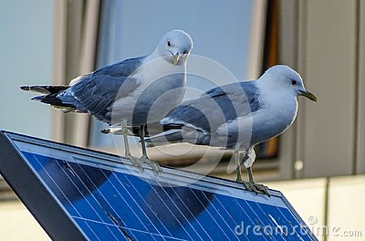 Seagulls on solar panel
