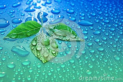 green leaves on blue water drop background ecology energy of plant life