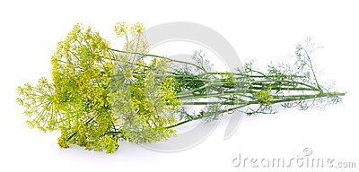 Dill on white.