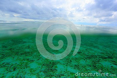 Amazing view on both above water sutface and under water surface world.  Amazing nature backgrounds.