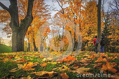 Amazing autumn. autumn leaves in colorful park. Fall landscape. Yellow and red trees in alley