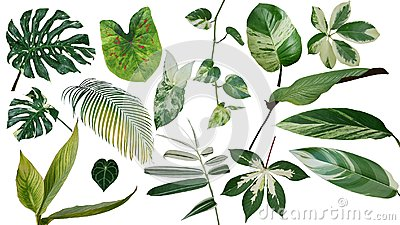 Tropical leaves variegated foliage exotic nature plants set isolated on white background, clipping path with plant common name in