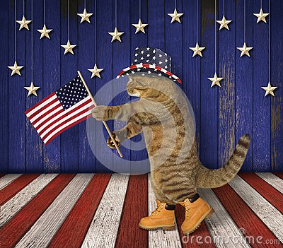 Cat patriot on stage