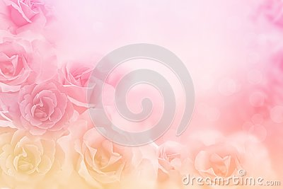 Beautiful pink roses flower border on soft background for valentine