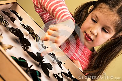 Little Girl Researching Entomology Collection of Tropical Butterflies