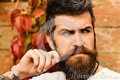 Autumn season and beauty concept. Guy posing near red leaves on wall. Macho with beard