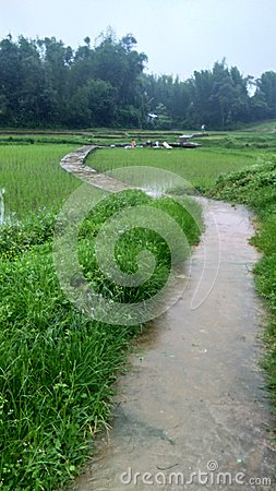 Footh path