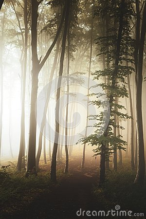 Path in fairy tale landscape inside foggy forest. Silhouette trees in moody woodland