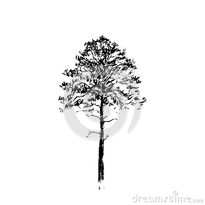 Pine tree. Black line drawing Isolated on white Background. Hand drawn vector illustration. Pencil sketch.