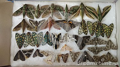 Moth collection