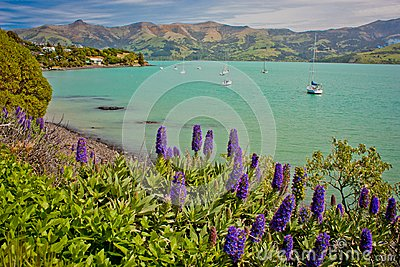 Small harbour of Akaroa on peninsula near Christchurch, New Zealand