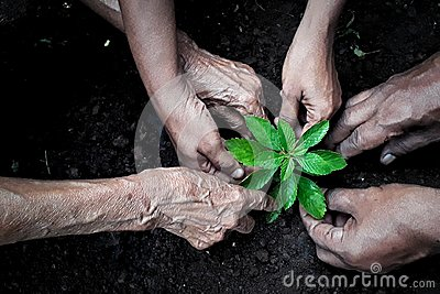 Group of people planting