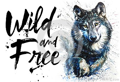 stock image of wolf watercolor predator animals wildlife, wild and free, king of forest, print for t-shirt