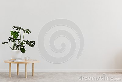 Plant on wooden table against white empty wall with copy space in living room interior. Real photo. Place for your furniture