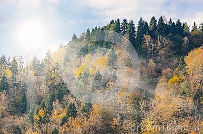 Mountain top, trees with yellow leaves, green firs. Autumn sunny day