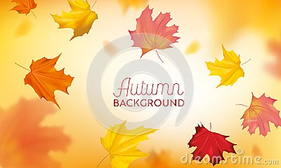 Autumn Background with Red and Yellow Maple Leaves. Nature Fall Seasonal Design Template for Web Banner, Leaflet, Sale
